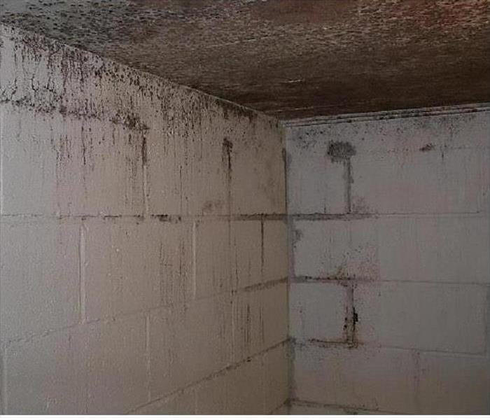 Montgomery Mold, Moisture and Remediation Before