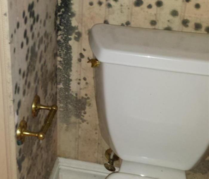 Mold Damage – Lake Martin House
