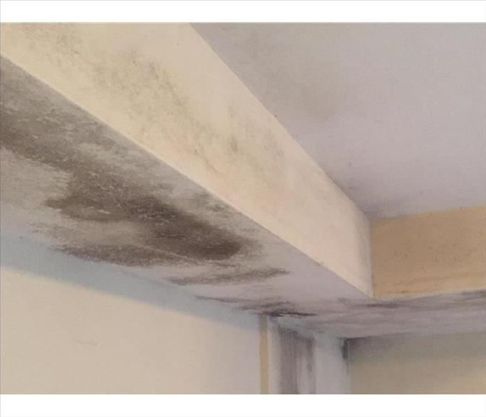 Chisholm Mold Problem in a Ceiling and Room