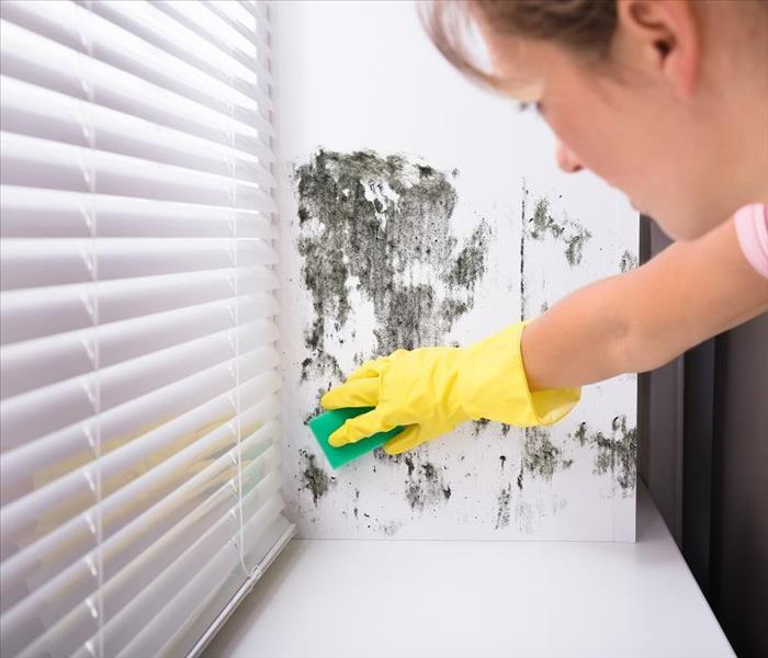 Mold Remediation What are the Most Important Questions You Should Ask if You Suspect Mold Damage in Your Highland Park Home