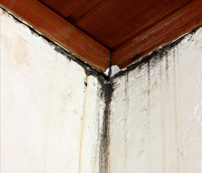 Mold Remediation Mold Damage Cleanup for Your Highland Park Home